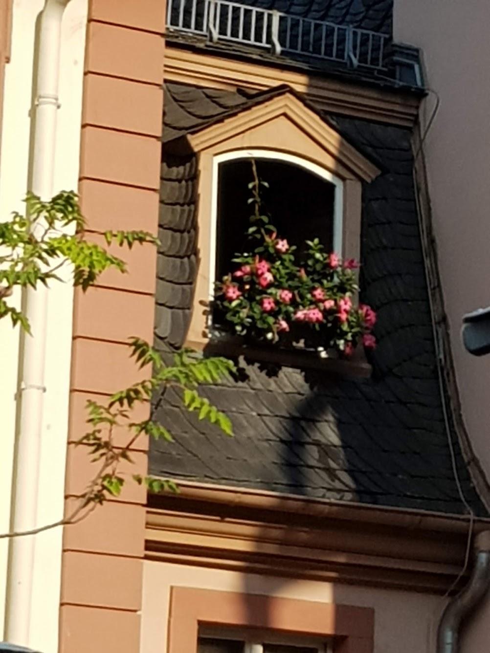 Mainz - Foto 10 Gisela Kentmann
