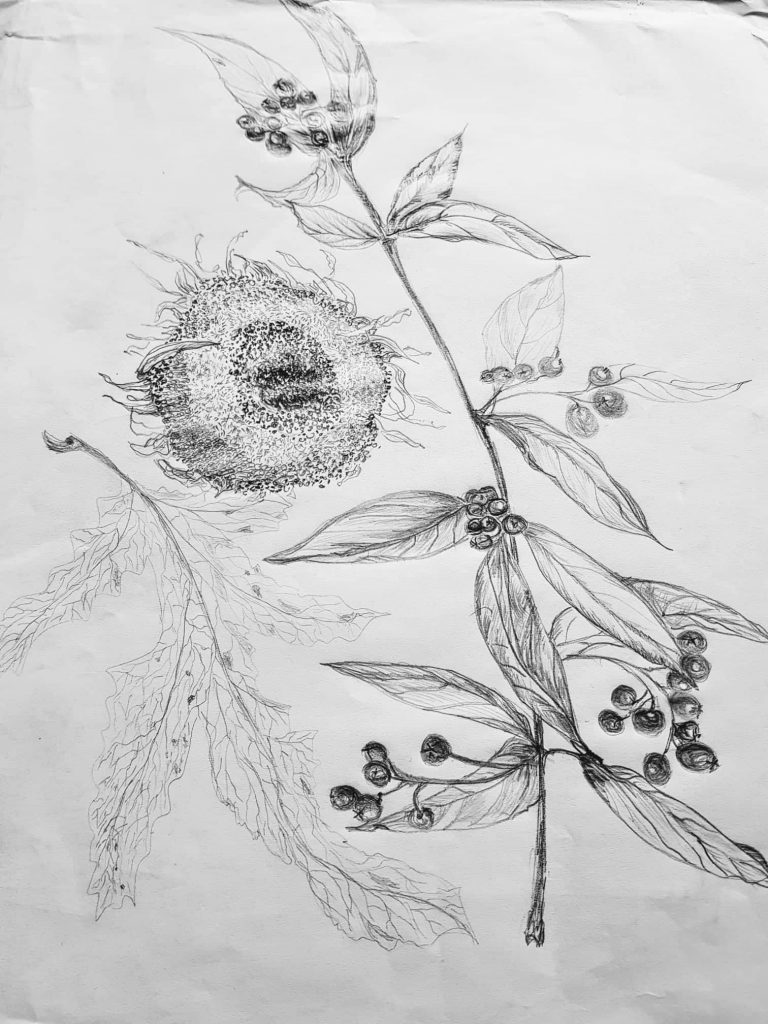 Graphik ohne Titel Technik : Bleistift - Zeichnung von Gisela Kentmann (1)